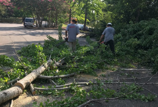 Hoover_city_hall_tree_removal (1)