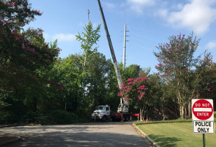 Hoover_city_hall_tree_removal (2)