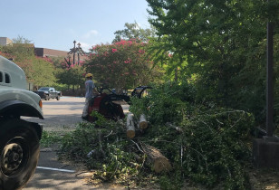 Hoover_city_hall_tree_removal (4)
