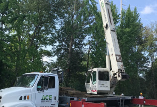 Hoover_city_hall_tree_removal (5)